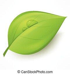folha verde, com, gota, água