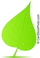 folha verde, com, gotas água