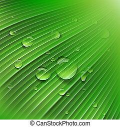 folha verde, com, gotas, de, água