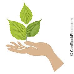 folha verde, com, mão., vetorial