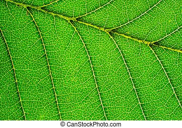 folha verde, detalhe
