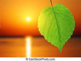 folha verde, e, amanhecer, sobre, mar