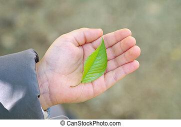 folha verde, em, criança, mão.