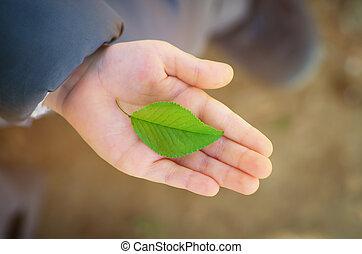 folha verde, em, criança, mão
