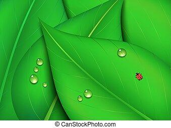 folha verde, fundo, natureza