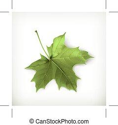 folha verde, maple