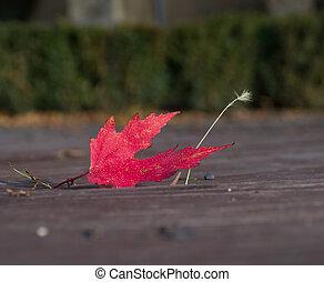 folha vermelha, caiu, ligado, a, road.