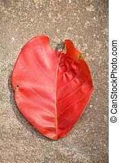 folha vermelha, chão