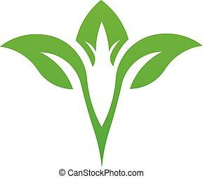 folha, vetorial, verde, natural, logotipo