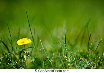 folhagem, flor, cercado, amarela, um