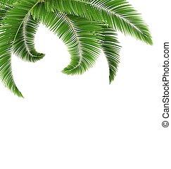folhas, árvore, isolado, verde, palma, branca