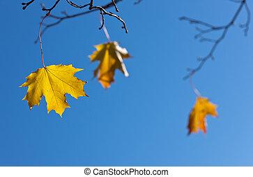 folhas, último, três