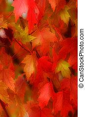 folhas, 2, outono