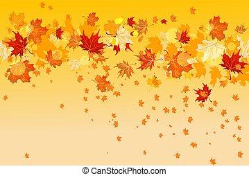 folhas, amarela, maple
