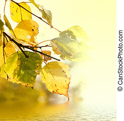 folhas, amarela, vidoeiro
