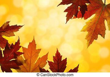 folhas, backlit, outono, cores, outono, misturado, maple