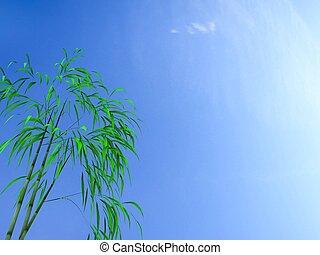 folhas, bambu
