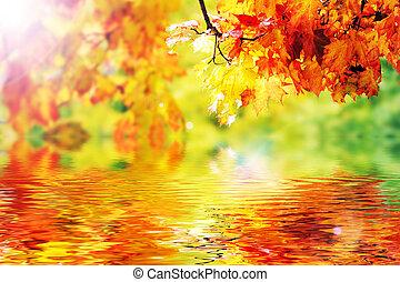 folhas, bonito, outono, coloridos, parque