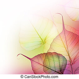folhas, border., bonito, floral