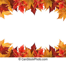 folhas, branca, maple, isolado