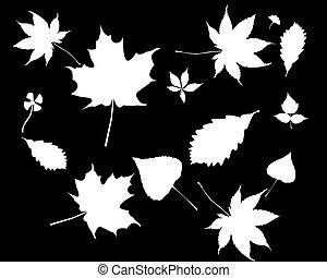 folhas, branca, silhuetas