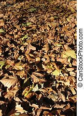 folhas, caído