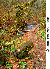 folhas, caia, outono, ligado, um, rastro, em, a, floresta tropical