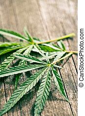 folhas, cannabis