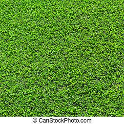 folhas, capim, experiência verde