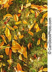folhas, capim, verde, amarela