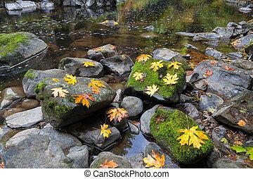 folhas, cedro, riacho,  Maple, outono
