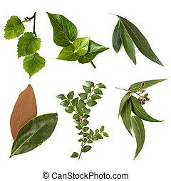 folhas, cobrança, isolado, branco