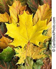folhas, colorido, bonito, outono, parque