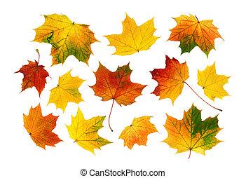 folhas, coloridos, jogo, outono