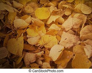 folhas, coloridos, outono