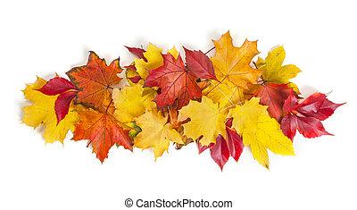 folhas, coloridos, outono, grupo