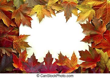 folhas, cores, outono, misturado, borda, maple