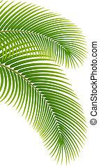 folhas, de, árvore palma, branco, experiência.