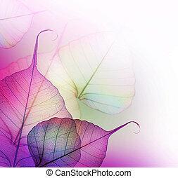 folhas, design., floral