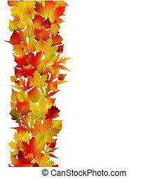 folhas, eps, multicolored, outono, 8, maple