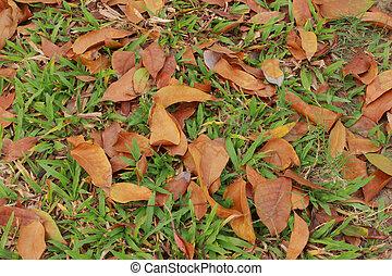 folhas, estrada