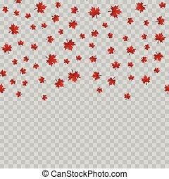 folhas, experiência., vector., queda, transparente, maple