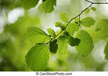 folhas, experiência verde