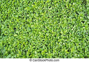 folhas, experiência verde, natureza