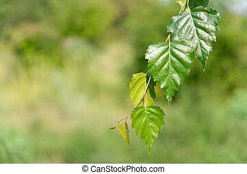 folhas, floresta, profundo, vidoeiro