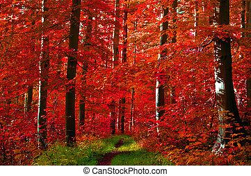 folhas, floresta, vermelho
