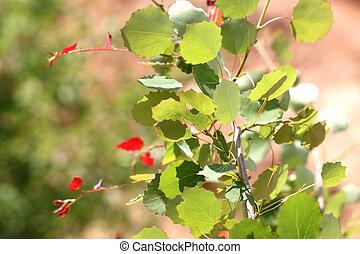 folhas, floresta, vidoeiro