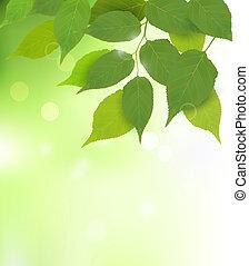 folhas, fresco, fundo, verde, natureza
