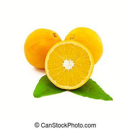 folhas, fundo branco, laranjas