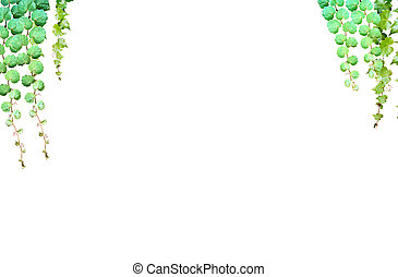 folhas, fundo, verde branco